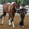 "Kelsey Leyva — The Morning Journal <br> Peyton Lunn, 11, of LaGrange, jogs alongside her horse Leo on Aug. 24 during the Junior Fair Saddle Horse Show at the Lorain County Fair. Lunn earned a red ribbon or ""B"" in showing."