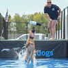 "Eric Bonzar — The Morning Journal <br> Belgian Malinois ""Elektra"" snatches her toy out of mid-air during a practice run with handler and trainer Crystal McClaran, of Cape Coral, Fla., Aug. 26, 2016."