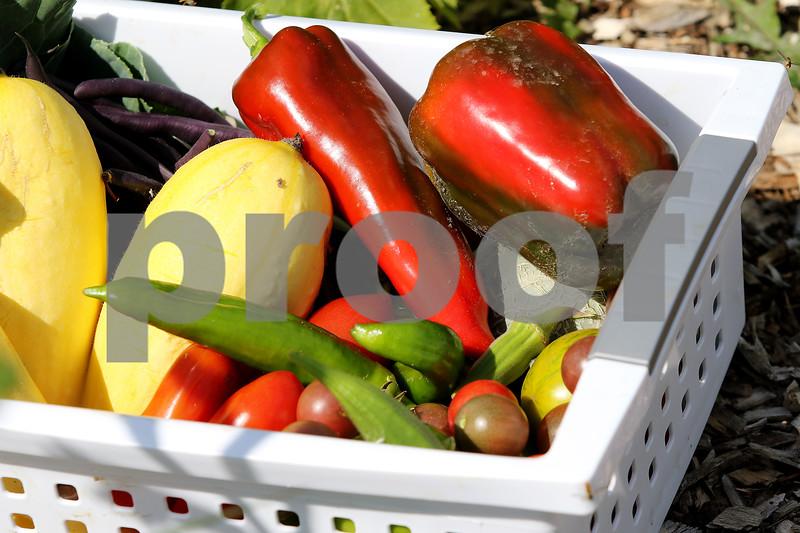 dnews_0828_DCCG_Harvest_03