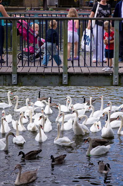 Families with children feeding swans from Bridge, Kingston upon Thames, Surrey, United Kingdom