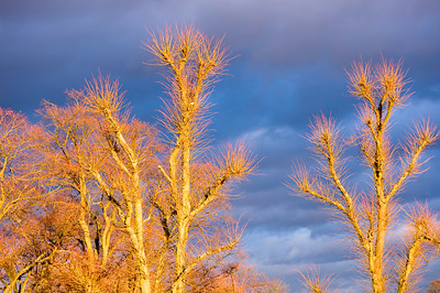 Dramatic winter sky above Ealing Common W5 London United Kingdom