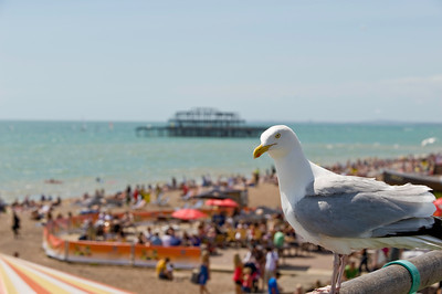 Seafront in summer, Brighton, East Sussex, United Kingdom