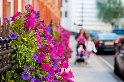 Smart looking street by Montagu Mansions, W1, London, United Kingdom