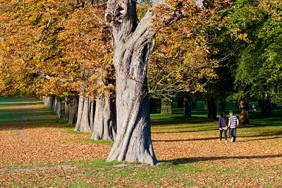 Bushy Park, Surrey, United Kingdom