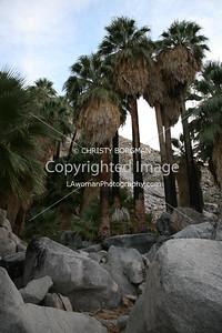 49 Palms, Joshua Tree