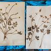 9 19 20 Nahant Herbarium exhibit 5