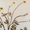 9 19 20 Nahant Herbarium exhibit 6
