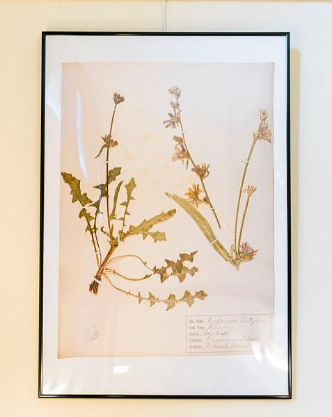 9 19 20 Nahant Herbarium exhibit 9