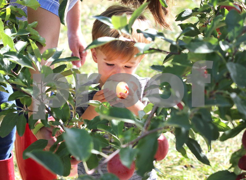 dc.0905.apple orchards03