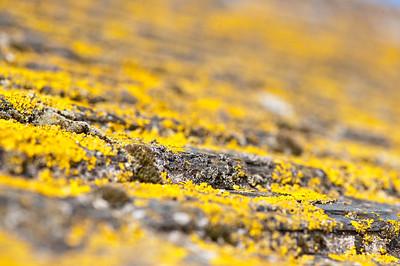 Roof tiles, St Ives, Cornwall, United Kingdom