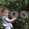 Deanna Frances for Shaw Media<br /> Veronica Syslo, 3, of Oswego, picks apples on Sunday at Jonamac Orchard, 19412 Shabbona Road in Malta.