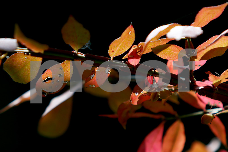 dnews_0913_Colorful_Fall_