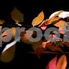 dnews_0913_Colorful_Fall_