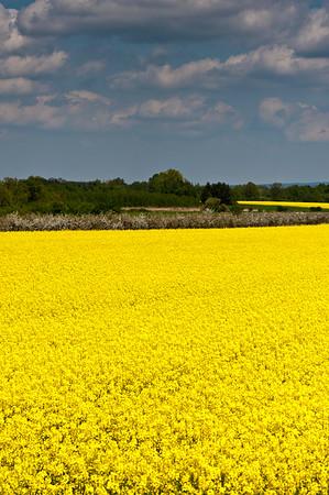 Rural landscape near Wroclaw, Silesia, Poland