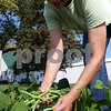 Christopher Heimerman – cheimerman@shawmedia.com<br /> Heather Edwards, director of the Walnut Grove Vocational Farm, picks green beans Friday morning.