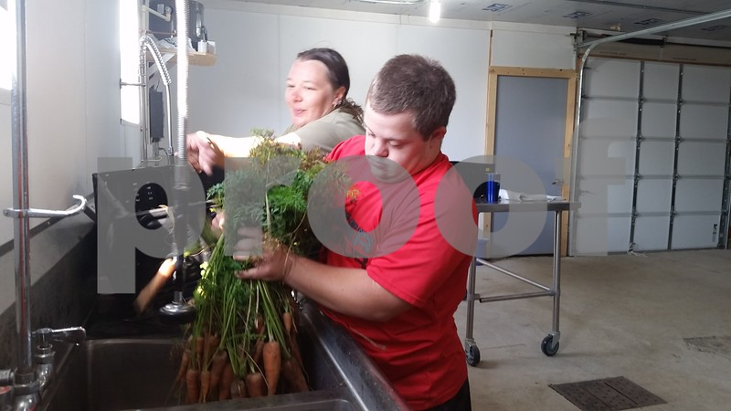 Christopher Heimerman – cheimerman@shawmedia.com<br /> Jake Hickey, 22, of Sycamore, works with Walnut Grove Vocational Farm worker Meghan Chadra to clean carrots Friday morning at the farm, 33600 Pearl St., Kirkland. Jake just started a new job at Klein's Quality Produce in Burlington, thanks to the vocational program.