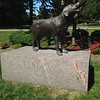 Tiberius, Lake Erie College canine mascot