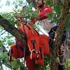 Kristi Garabrandt — The News Herald <br> Scott Meeks participates in the aerial rescue event.