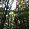 The Kalberer Family Emergent Tower is described by Holden Arboretum as a wooden tower that rises 120 feet above the forest floor for breathtaking views of the surrounding landscape. (Kailee Leonard/The News-Herald)