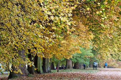 Hyde Park in autumn, London, United Kingdom