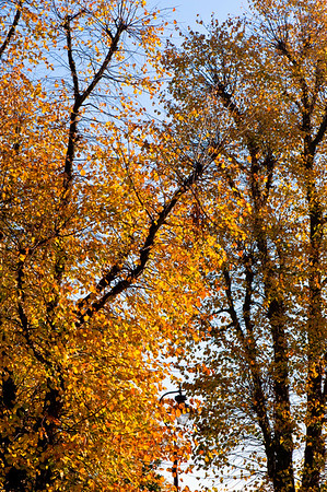 Trees in autumn colours, Ealing, London, United Kingdom