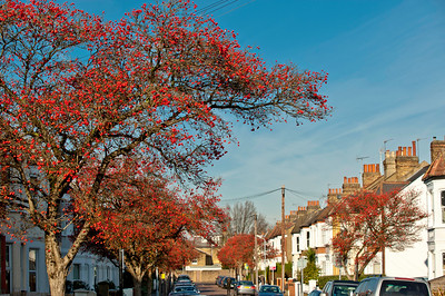 Pretty street in autumn colours, Chiswick, W4, London, United Kingdom