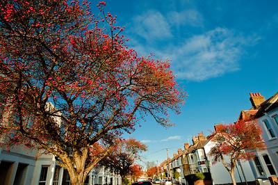 Eastbury Grove, W4, Chiswick, London, United Kingdom