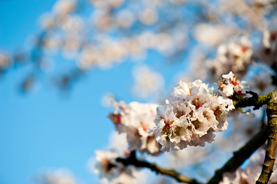 Spring blossom, London, United Kingdom