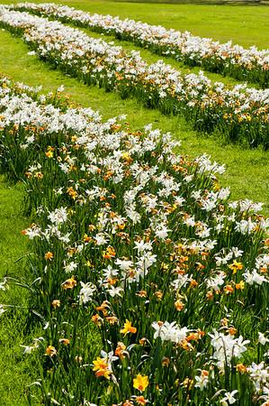 Spring on Ealing Common, London, United Kingdom