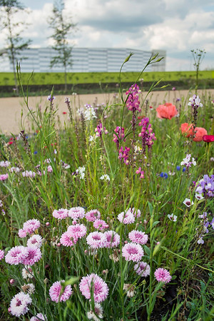 Meadow at the entrance to Olympic Park, Hackney, London, United Kingdom