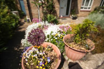 Front garden, Hammersmith, W6, London, United Kingdom