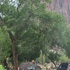 Camping right on the river in Zion!