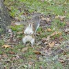 "Squirrels --so many -Squirrels...loved this guy, I felt like he was say, ""whats up, what you want?"""