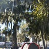 Camp Kennedy KOA tent spot - love these trees they have the hanging moss like the ones in Cambria Cali