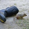 This little guy loved my REVIT boots