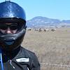 Zebras in California