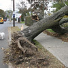 Day after storm 1