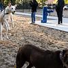 10 18 18 Peabody dog park opening 11