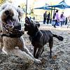 10 18 18 Peabody dog park opening 5