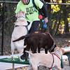 10 18 18 Peabody dog park opening 2