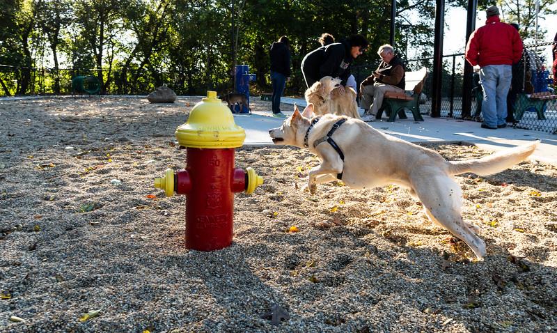 10 18 18 Peabody dog park opening 12