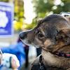 10 18 18 Peabody dog park opening 8