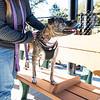 10 18 18 Peabody dog park opening 13