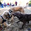 10 18 18 Peabody dog park opening 4