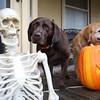 HalloweenCandyHandout1028 Falcigno 05