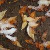 10 30 20 Lynn snow features 13