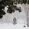 10 30 20 Lynn snow features 9