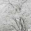 10 30 20 Lynn snow features 11