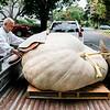 10 3 19 Swampscott giant pumpkin