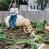 10 3 19 Swampscott giant pumpkin 13